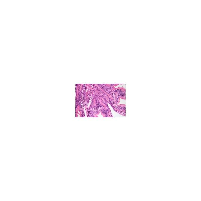 Comparative Digestive Microscope Slide Set, 45 Slides