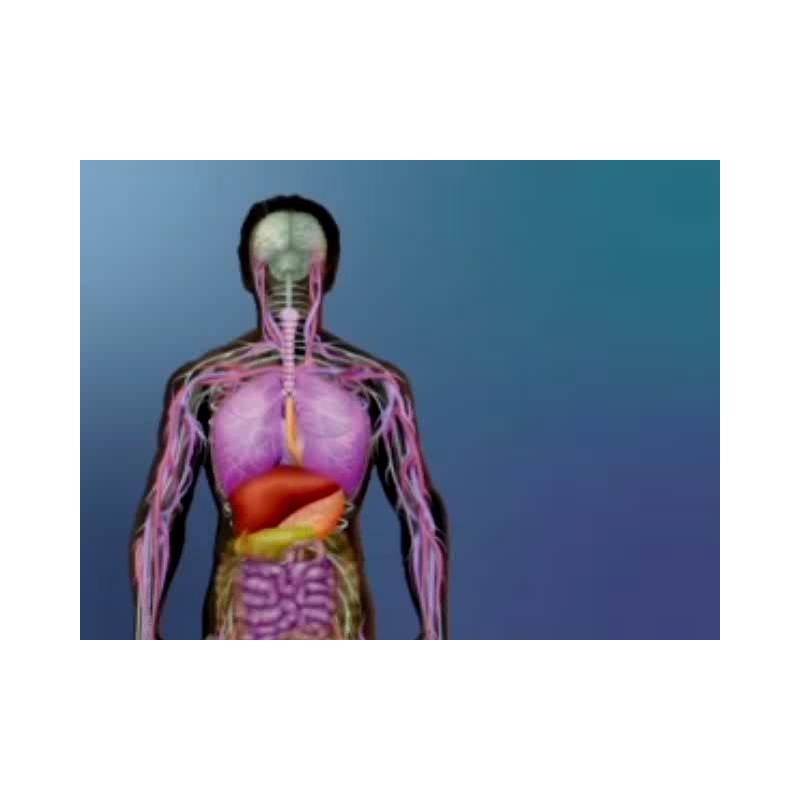 Visualizing Human Physiology DVD - 15 minutes
