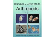 The Biology of Arthropods DVD