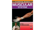 Human Body: The Muscular System