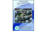 DNA Replication, Mitosis and Cell Reproduction