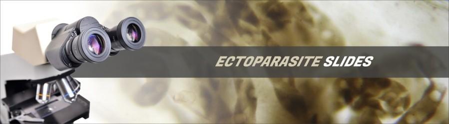 Ectoparasite Slides
