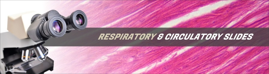 Respiratory & Circulatory Tissue Slides