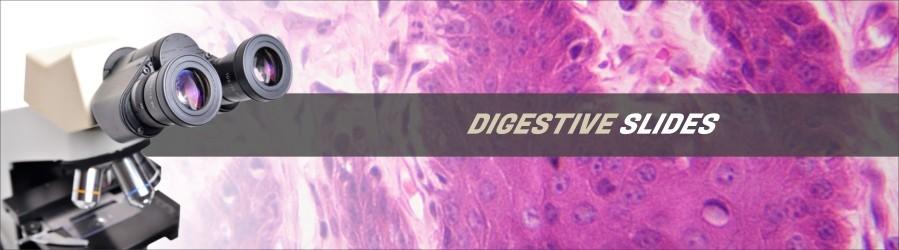 Digestive Tissue Slides