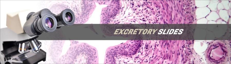 Excretory Tissue Slides