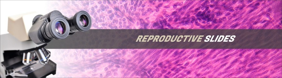 Reproductive Tissue Slides