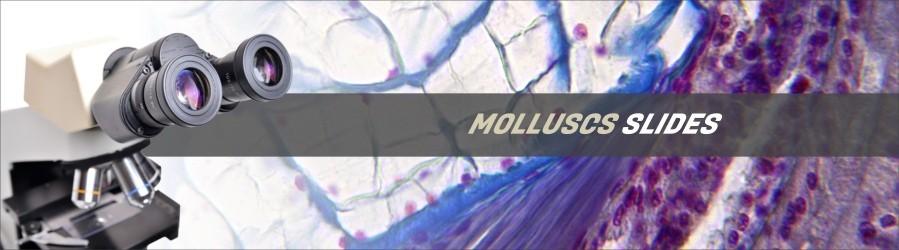 Mollusc Slides