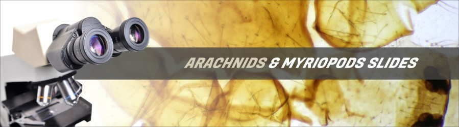 Arachnids & Myriopod Slides
