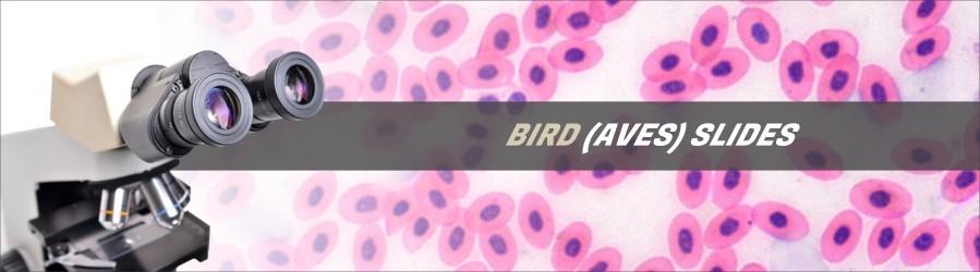Bird Slides