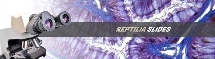 Reptile Slides