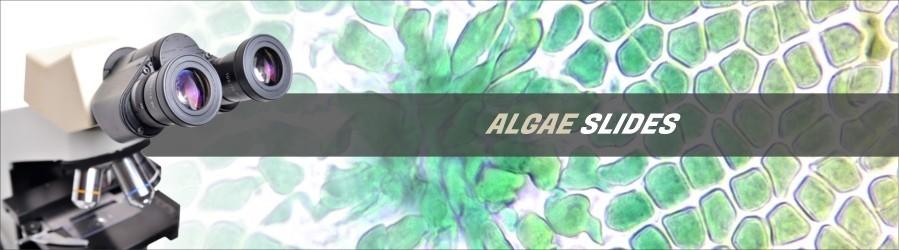 Algae Slides