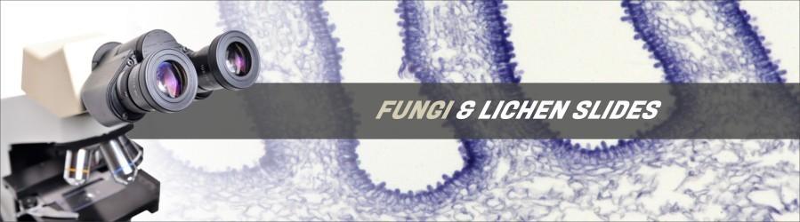 Fungi & Lichen Slides