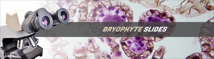 Bryophyte Slides