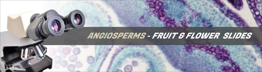 Angiosperms - Fruit & Flower Slides