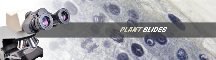 Plant Cytology and Genetics Slides