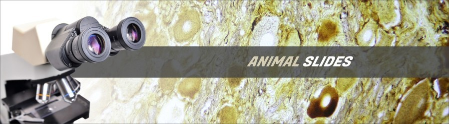 Animal Cytology and Genetics Slides
