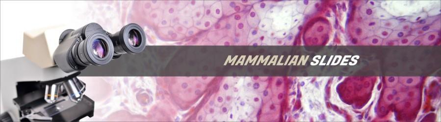 Mammalian Slides