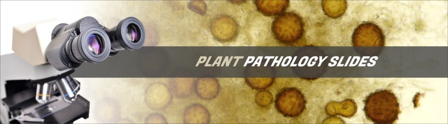 Plant Pathology Slides