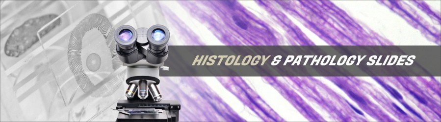 Human Histology & Pathology