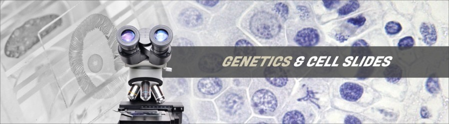 Cytology & Genetics