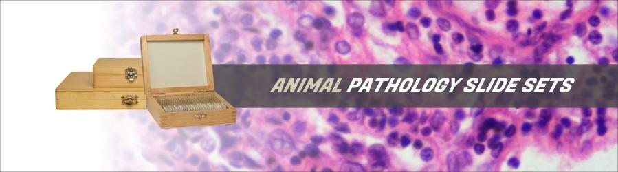 Animal Pathology