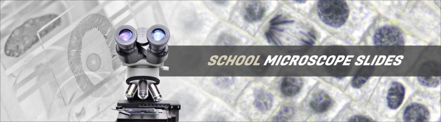 School Microscope Slides