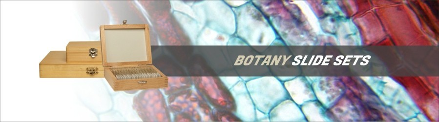 Botany Slide Sets