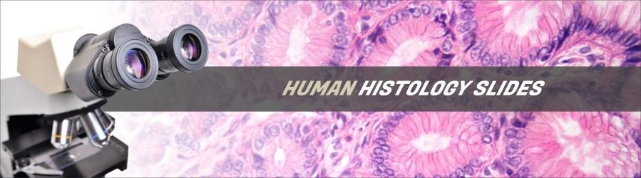 Human Histology Slides