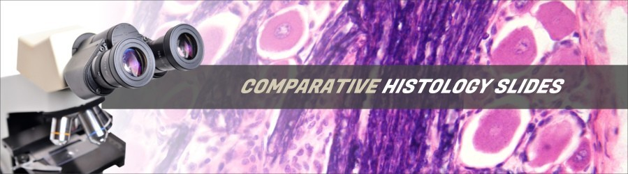 Comparative Histology Slides