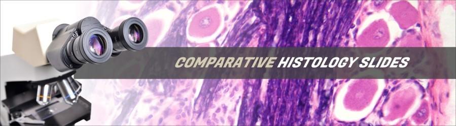Comparative Histology Slides