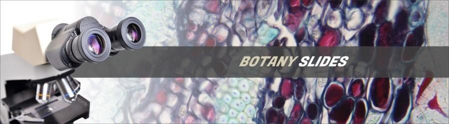 Botany Slides