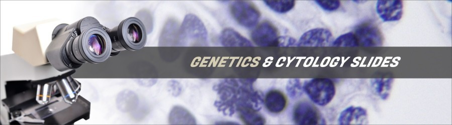 Cytology & Genetics Slides