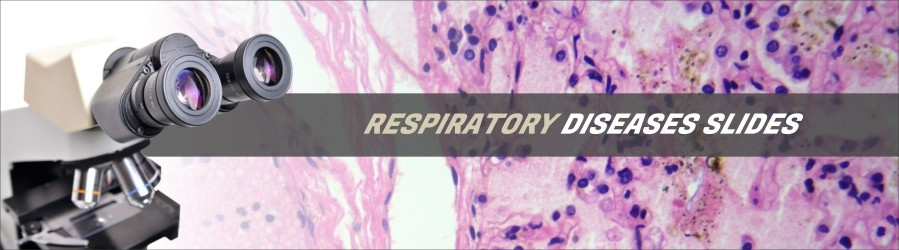 Respiratory Diseases Slides