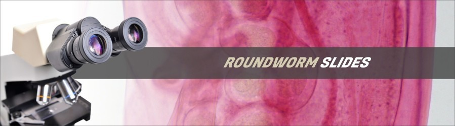 Roundworm Slides
