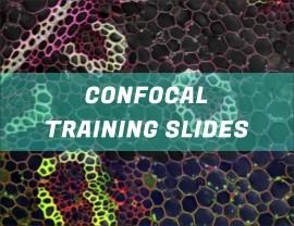 Confocal Testing Slides